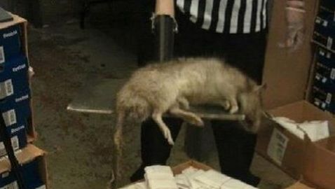 Bronx Foot Locker Boasts Giant Rat
