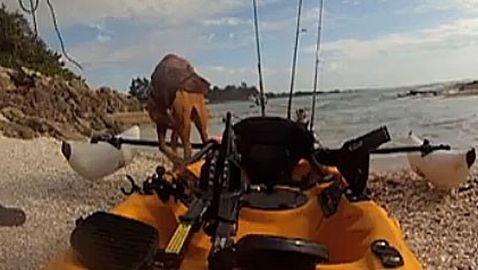 Kayaker Rescues Dog after Hit-and-Run Accident