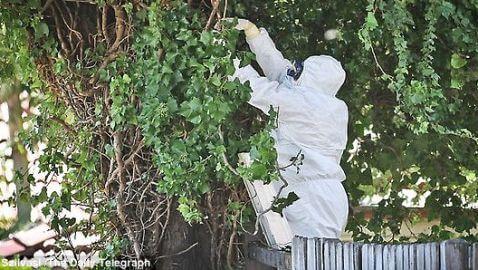 Body of US Woman Found in Australian Tree