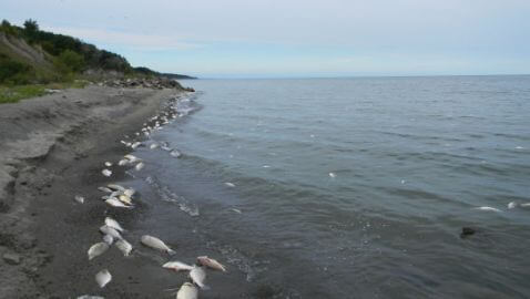 Thousands of Birds and Fish Found Dead in Lake Erie