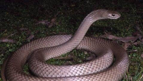 Three-Year-Old Boy Hides Eggs in Closet; Hatch as Snakes