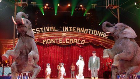 $9.3 Million Settlement in Circus Elephant Case