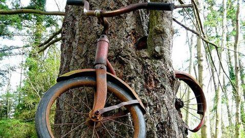 Bicycle Embedded in Tree in Washington State