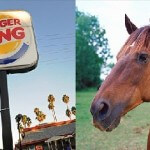 UK Burger King Serves Horse-Meat in their Burgers