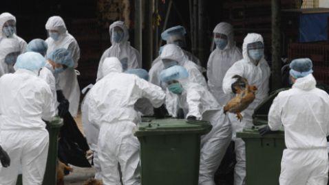 Two Men Killed in Shanghai by New Strain of Bird Flu