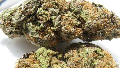 Washington Making Legal Marijuana Available in July