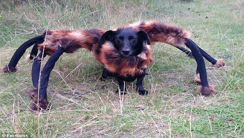 Man Terrifies Innocent Citizens with Dog Spider