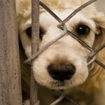 Animal Cruelty Now Felony According to FBI