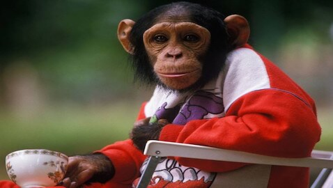 Tommy the chimp should not be granted legal rights, an appeals court has ruled.