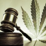 Marijuana Law Classes Appearing in Law School Curricula