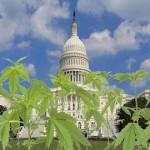 Citizens of Washington D.C. Nervously Await Marijuana Legalization
