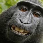 'Monkey Selfie' Case May Set New Legal Precedent