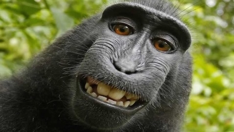 PETA has filed a lawsuit against a photographer, alleging that a photograph a macaque snapped should be its own property.