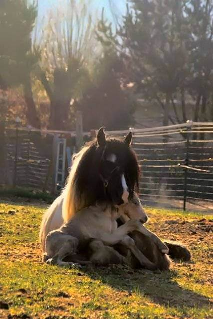 Mama horse with baby on lap