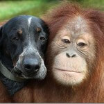 Don't Miss This Adorable Monkey and Dog That Are Best Friends