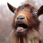 Man Sleeps with Goat Because He's Afraid of HIV from Women