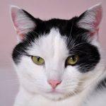 8 Impressive Health Benefits of Pet Ownership